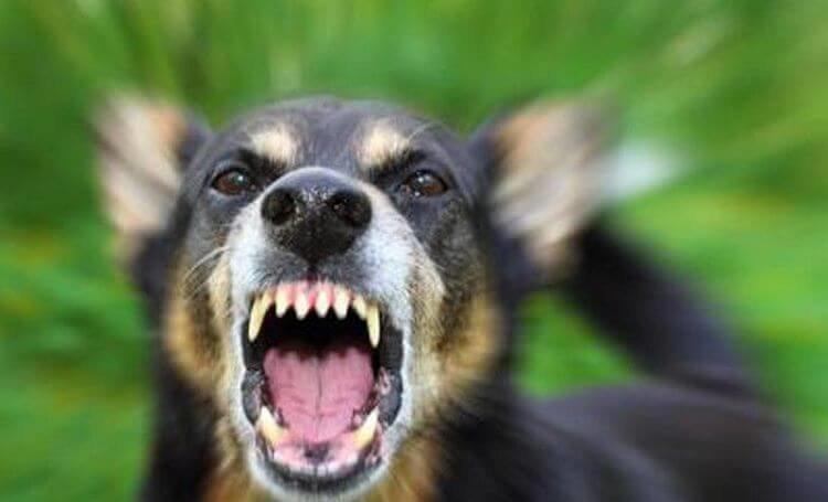 Спецназ советует: как действовать при нападении собаки
