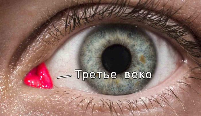 trete veko - Десять самых бесполезных человеческих органов