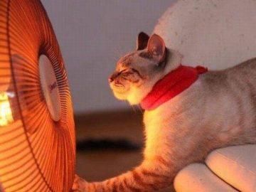 Питомец тяжело дышит в жару: опасно ли это и как помочь?